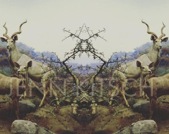Doubled Over Series: 1, Fine Art Print