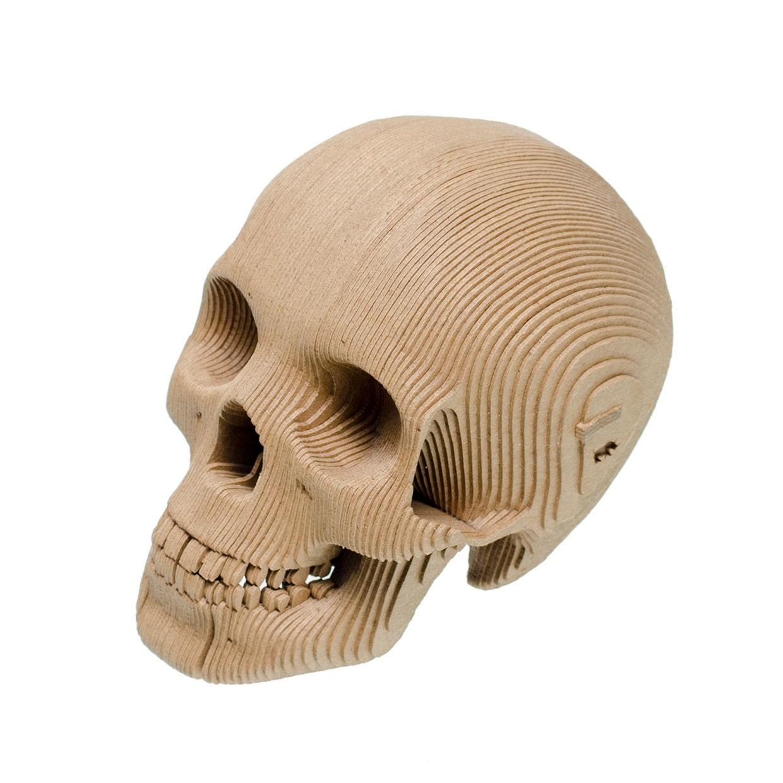 Cardboard Safari Vince Cardboard Human Skull Micro Etsy