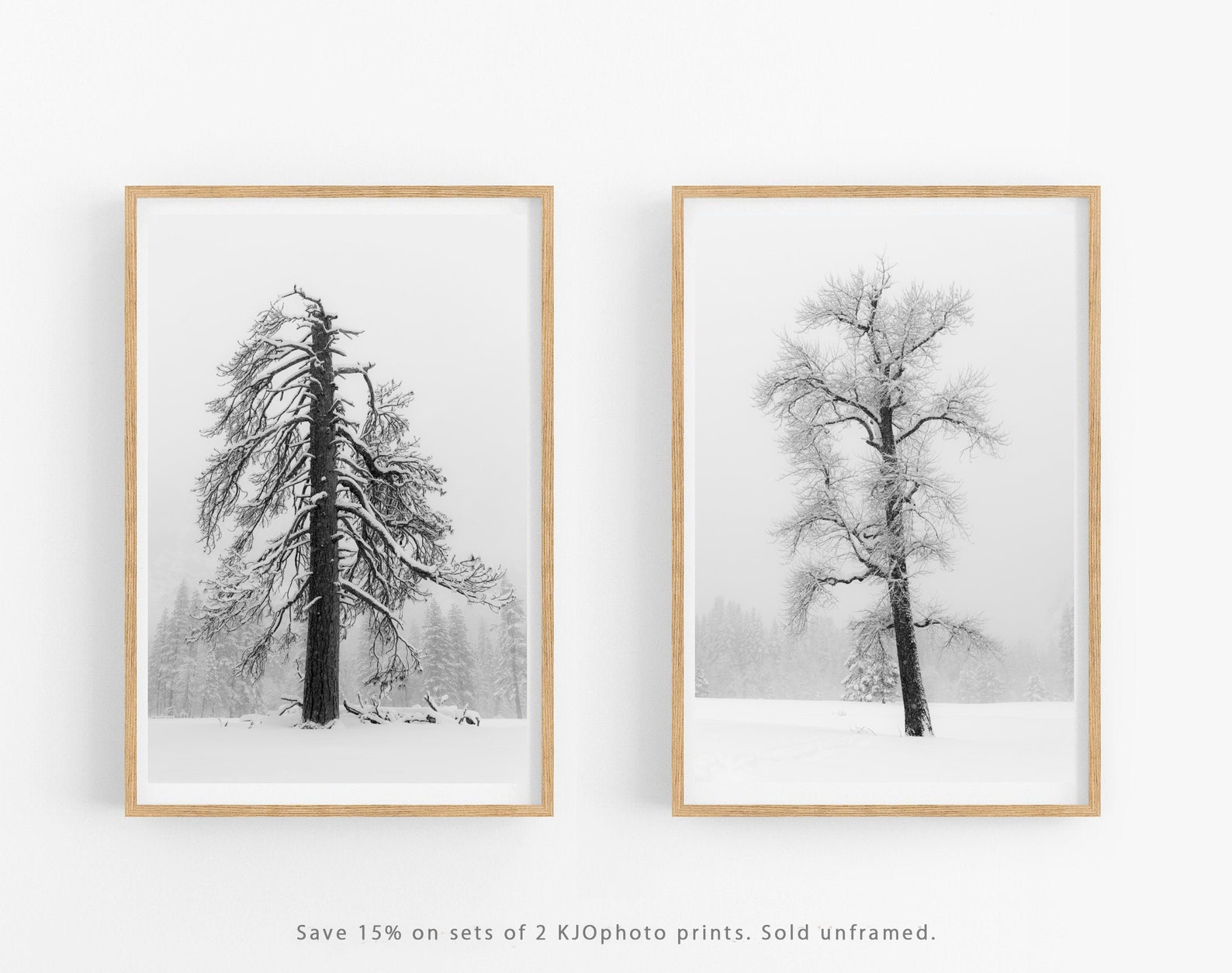 Tree Scene Yosemite