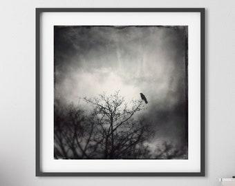 The Messenger PRINT - gothic crow photo, ethereal home decor moody dark art, dramatic spiritual tree bird mystical raven spirit animal totem