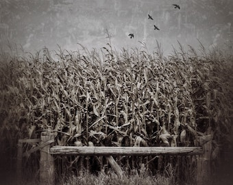 corn field photo, Rustic Wall Art, Farm Decor, Landscape Photography, Canvas Gallery Wrap, Farmhouse Decor, Neutral Art, Corn Stalks, dreamy