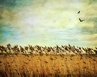 wheat field photo, country photo, nature photography, landscape, countryside, harvest, farm, golden, autumn, texture, blue, bird, Ontario