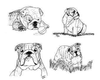 Bulldog Notecards (8)