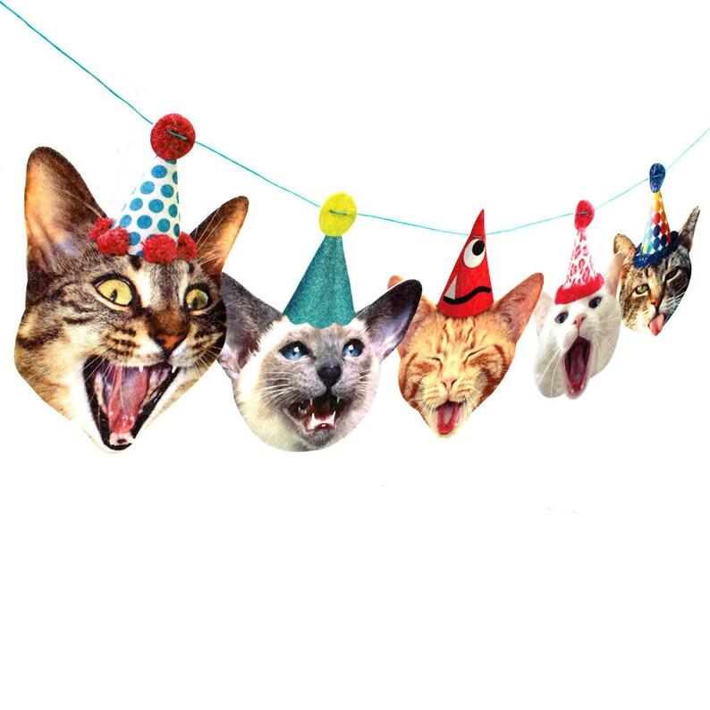 Katzen Geburtstag Foto Reproduktionen Auf Filz Lustige Etsy