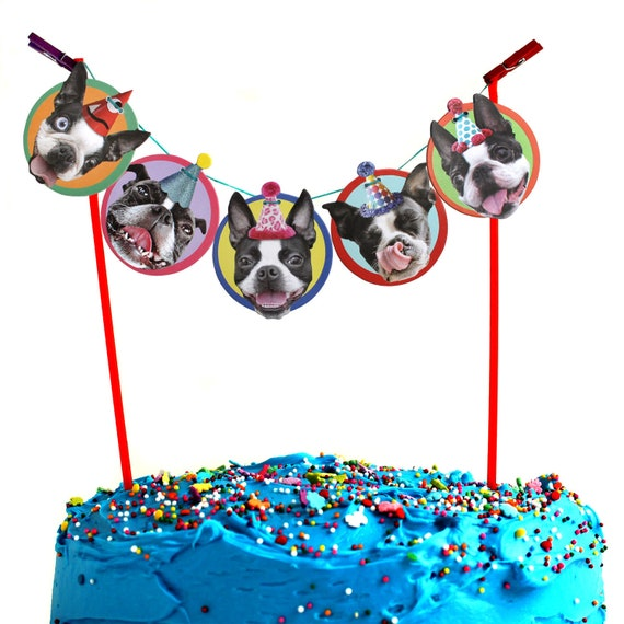 Fabulous Boston Terrier Birthday Cake Garland Party Decoration Banner Etsy Personalised Birthday Cards Paralily Jamesorg