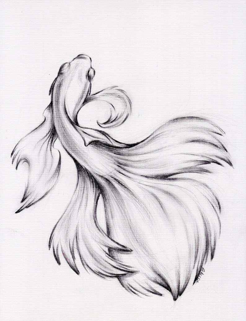 Water dance original charcoal pencil drawing of a siamese betta fighting fish