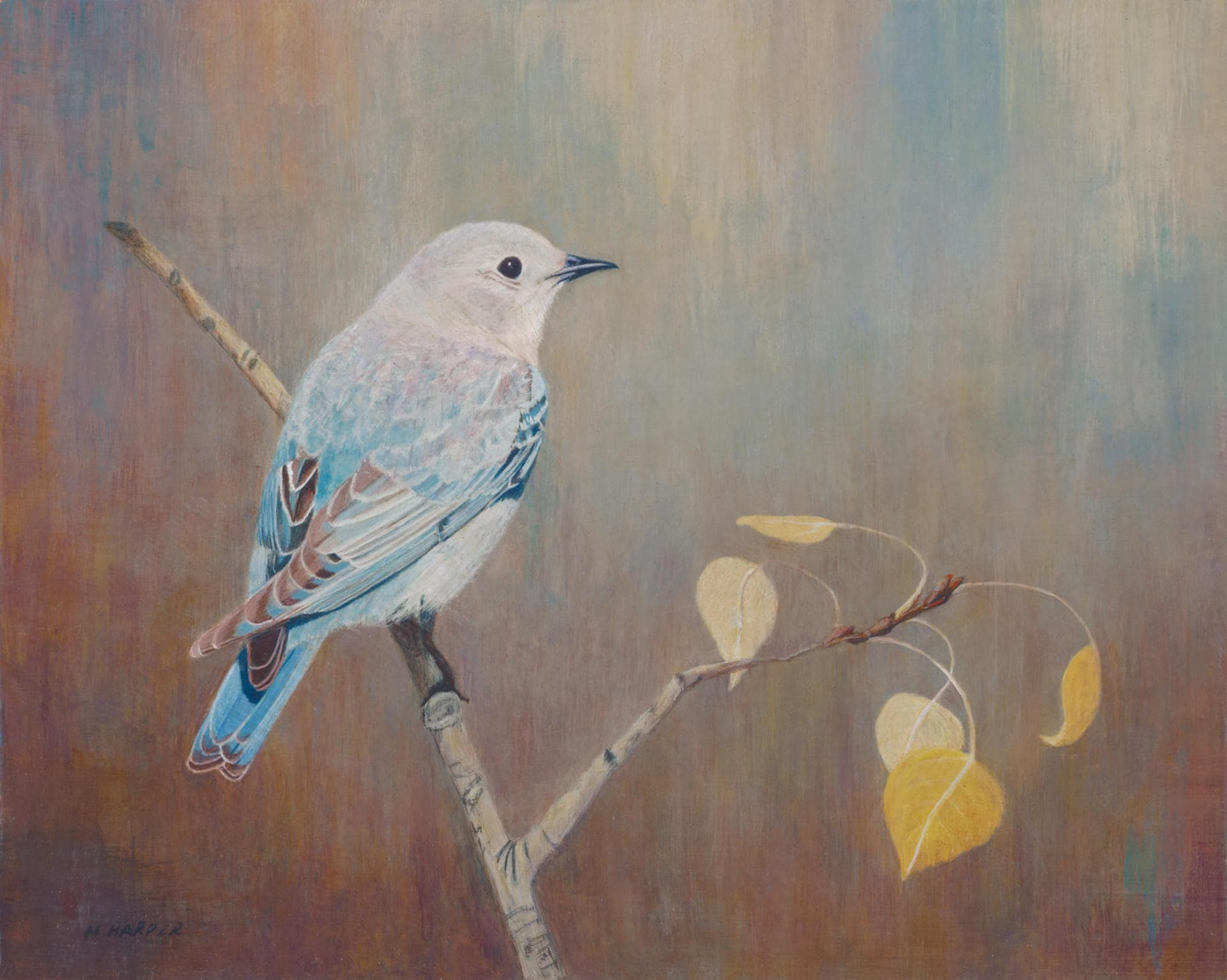 Bluebird Greeting Card Just Stopping By To Say Hello Bird Etsy
