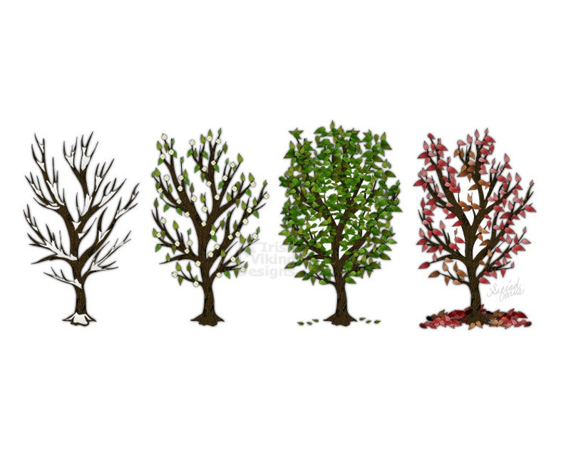 Four Seasons of Trees Winter Spring Summer Fall Rustic home image 0
