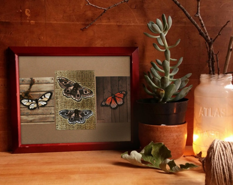 monarch butterfly emperor moth boho decor insects image 0