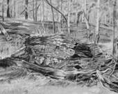 Original Landscape Sketch -Grey,Black- Charcoal Woods, Trees- 12x16- Horizontal