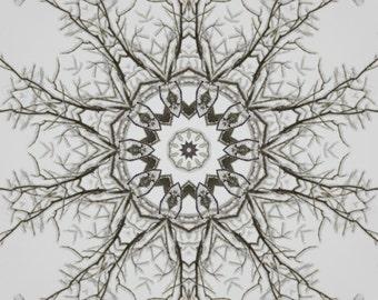 Abstract photo, tree limbs, kaleidoscope, home decor