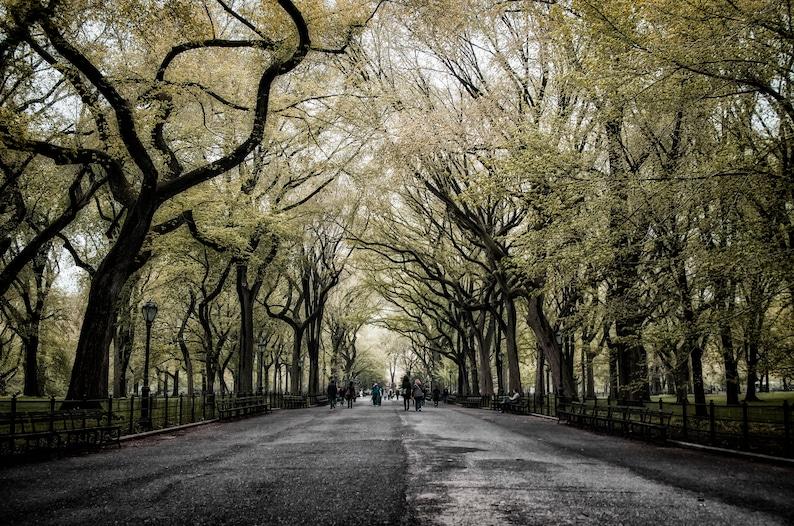 Fairytale of New York  Central Park New York City  Fine Art image 0
