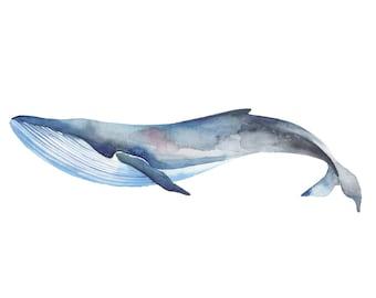Sei Whale Watercolour 4x6 Print