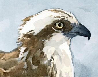 Osprey Watercolor Painting - 5x5 Bird Art Print, nature wildlife art
