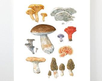 Edible Mushrooms Watercolor Art Print, Woodland Kitchen Wall Art Decor