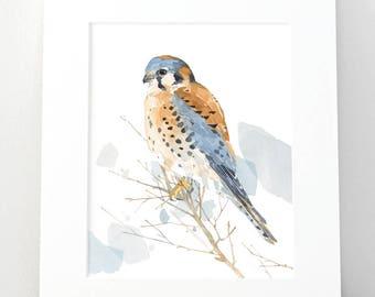 American Kestrel Watercolor Painting, Bird Print