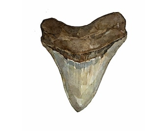 Megalodon Tooth Watercolor Illustration Print