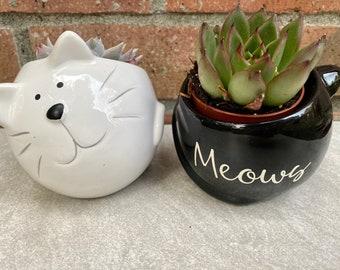 Black Cat Pot - Custom Name with Succulent | 5 Vegan Hot Chocolate Bombs | Optional Card