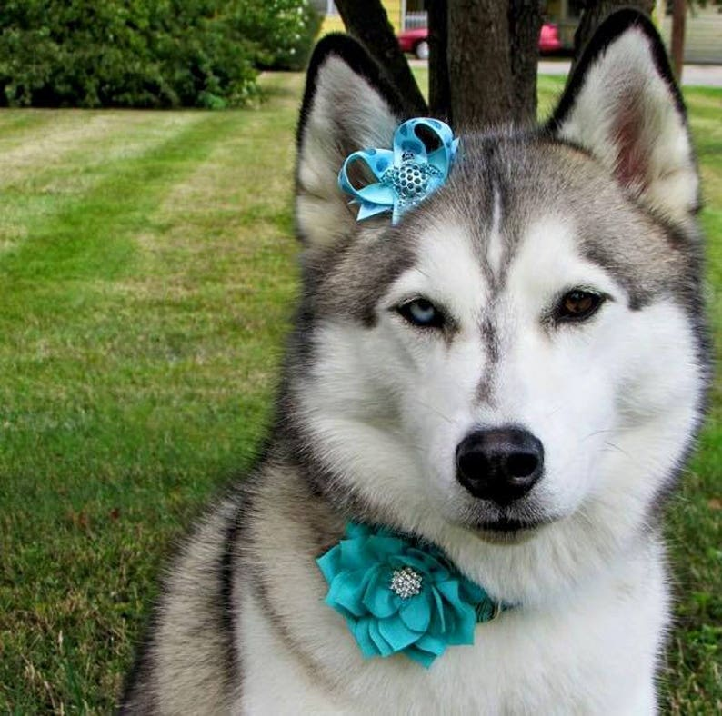 Top Knot Dog Bow Cat Collar Bow Pet Harness Bow Dog Collar Bow Easy To Use Pet Bow Seaworthy Snap-In Dog Bows\u00ae Bow