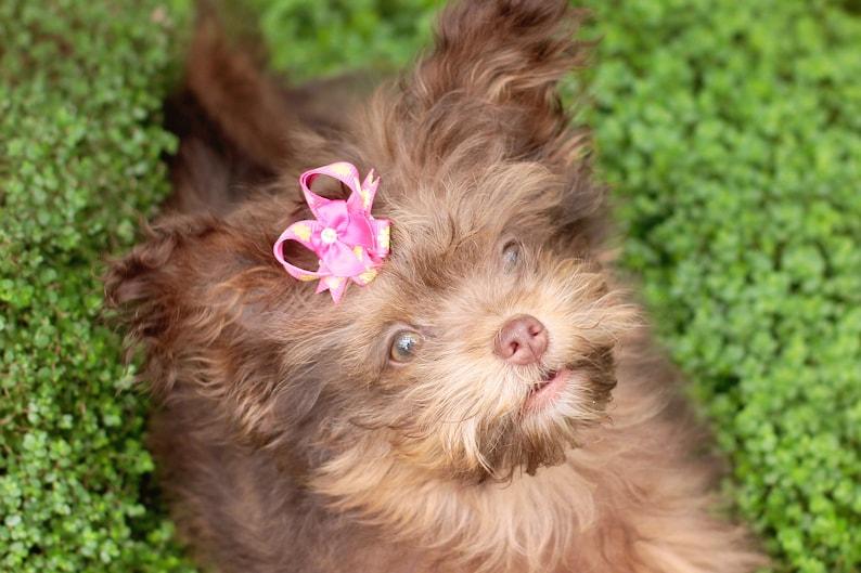 Dog Bow Pairs Easy To Use Pet Bows Drop Anchor Snap-In Dogs\u00ae Bow PAIR Small Dog Hair Bows Hair Friendly Pet Bows Dog Ear Bows
