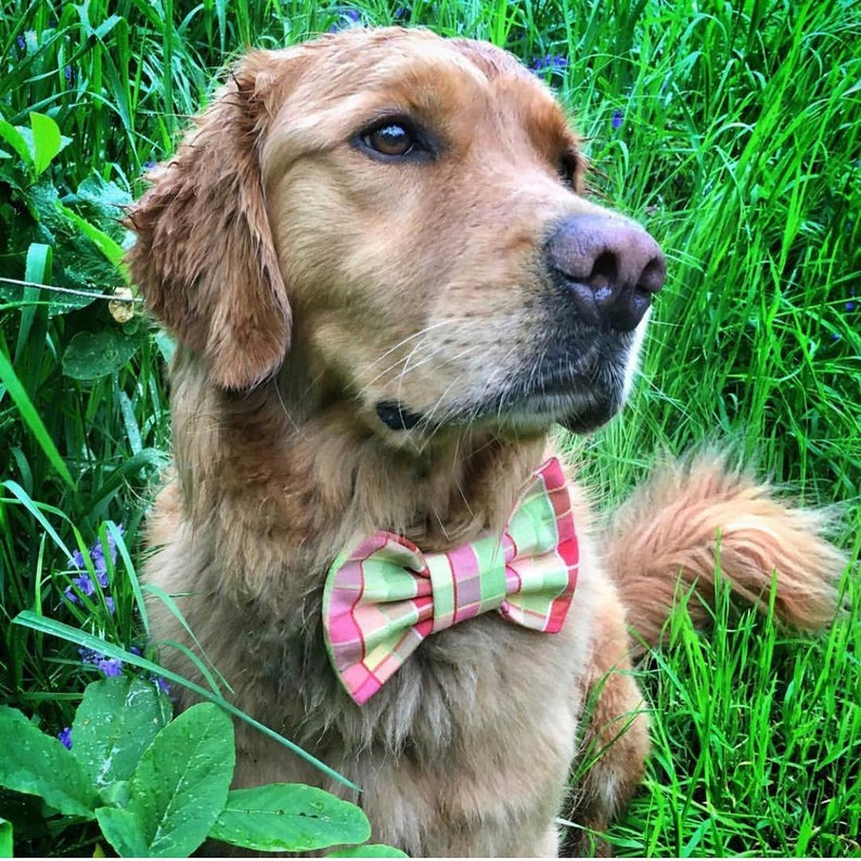 Summer Breeze Snap-In Dog Bows\u00ae Bow Tie Dog Bow Tie Dog Hair Bow Therapy Dog Bow Tie Cat Bow Tie Pet Harness Bow Cat Collar Bow