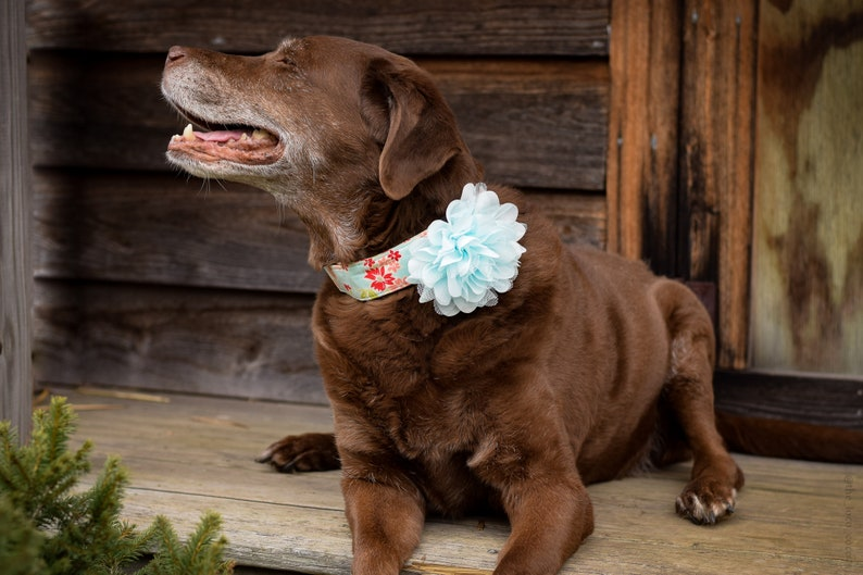 Therapy Dog Collar Flower Burst Into Bloom Snap-In Dog Bows\u00ae Flower EXTRA LARGE Pet Harness Flower Grey Dog Collar Flower