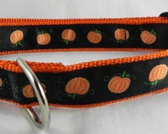 Fall Pumpkin Dog Collar