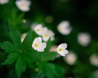 Delicate white flowers