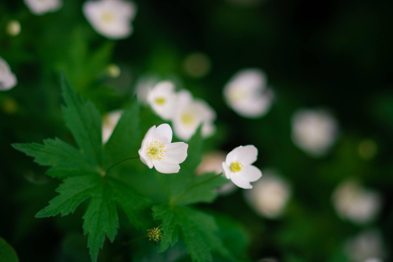 Delicate White Flowers Etsy