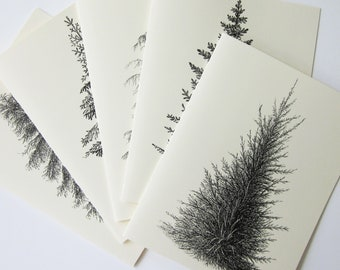 Pine Tree Note Card Set of 10 in White or Light Ivory with Matching Envelopes 5 Images