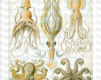 Haeckel Octopus Sea Life Digital Download Collage Sheet H