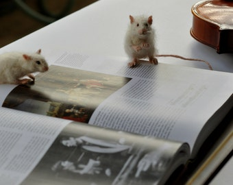 Needle Felted Mouse. White Mouse. Needle felt mouse. Real size .  Made to order