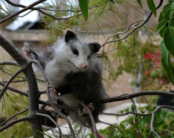 Needle Felted  Animals-Opossum . Made to order
