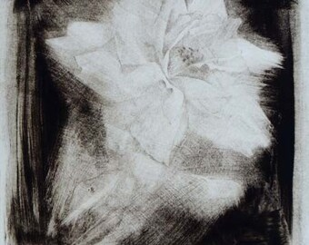 """Fine art print """"Rose"""" Drypoint drawing fading rose flower black white limited edition original print"""