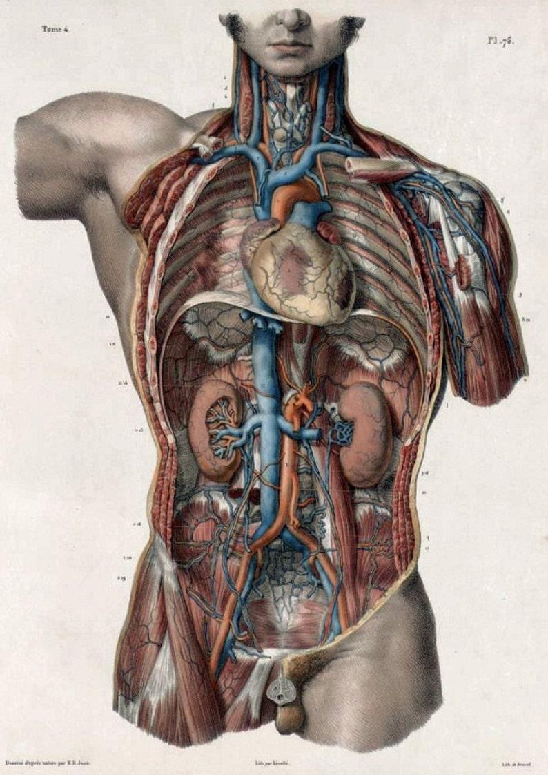 Hi Res Art Dvd Old 1500s Human Body Anatomy Organs Medicine Etsy