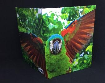 Parrot(Loro)