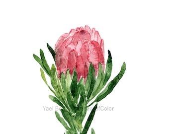 Protea flower watercolor, Protea painting, Flower painting, Pink Protea blossom art, Protea branch, floral art, plants watercolor