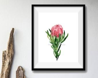 art print Protea flower, Protea watercolor print, Flower art print, Pink Protea blossom art, Protea branch print, floral art, plants art