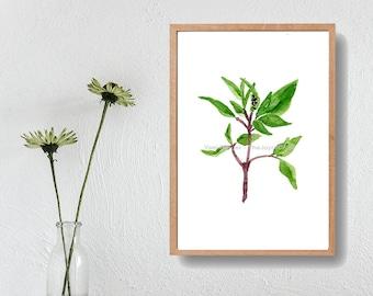 Basil art  Print, basil watercolor print, herbs art, botanical art print, kitchen art, foodie gift, green, home decor, minimalist art