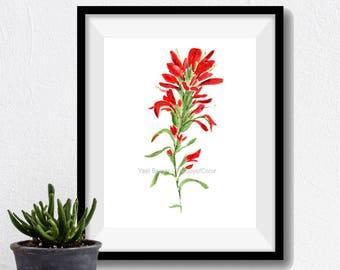 Indian paintbrush watercolor, Indian paintbrush painting, wild flower art, botanical painting, Red, Green, flower watercolor, Wyoming