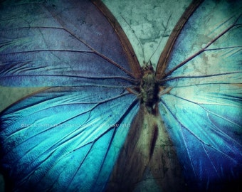 BUTTERFLY BLUE Abstract  16 x 20  Original Color Art Photograph Print Wall Art Home Decor