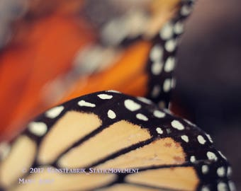 BUTTERFLY WINGS Macro Close up Original Color Art Photograph Print Wall ArtHome Decor