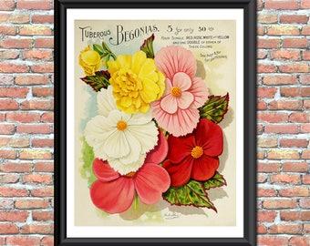 Begonia Art Print Vintage Seed Catalog Cover 1900s Digital Primitive Rustic Botanical Home Garden Nature Home Wall Decor Printable