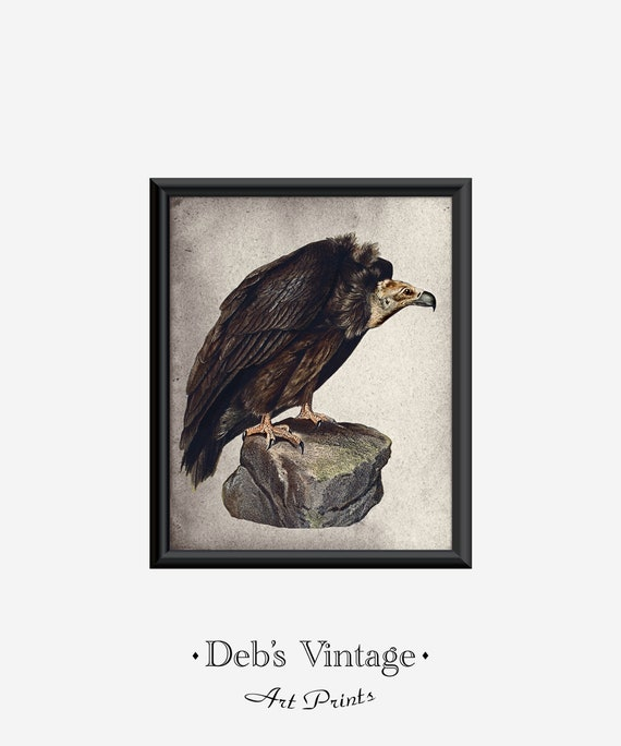Vulture Art Print Birds Of Prey Halloween Carrion Wall Hanging Etsy