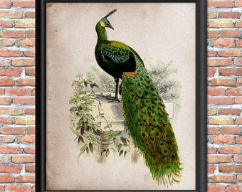 Peacock Art Print Home Decor Emerald Green Feathers Primitive Rustic Vintage Wall Hanging Bird Nature Printable Digital Download