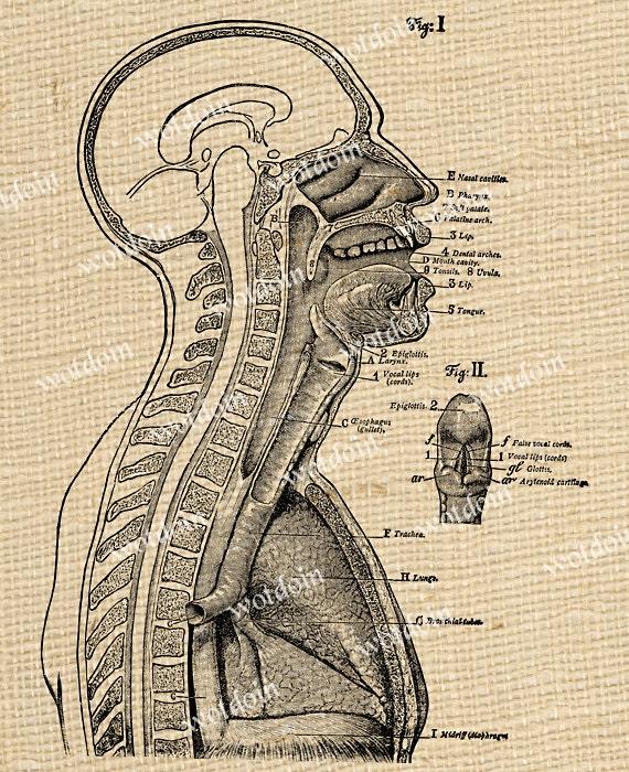 Anatomie Schädel Knochen Kopf medizinische Bild Übertragung | Etsy