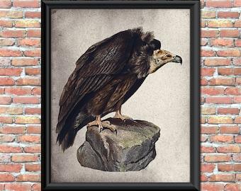 Vulture Art Print Birds of Prey Halloween Carrion Wall Hanging Home Decor Image Transfer Printable Digital Download