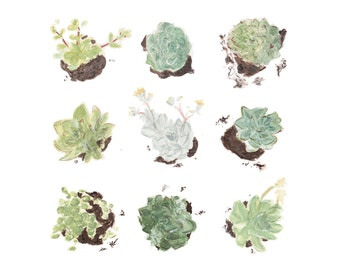 Succulent Study Botanical Print