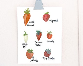 Watercolor Strawberry Cultivars botanical art print of watercolor illustration