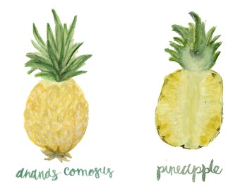 Pineapple Anatomy botanical art print of watercolor illustration